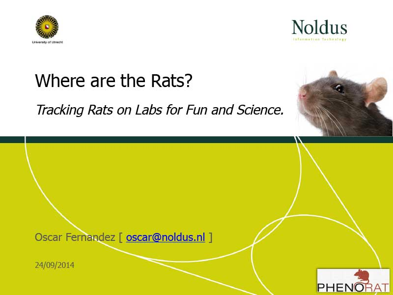 Oscar Fernandez | Where are the Rats?